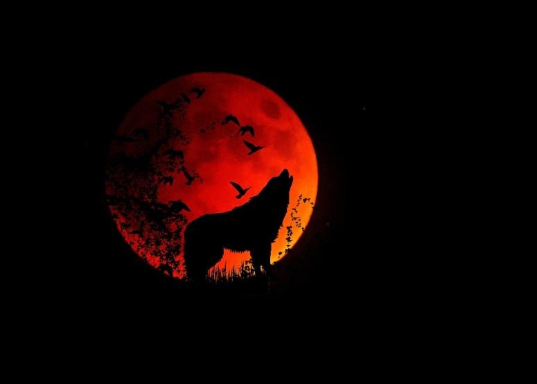 full-moon-1776051_960_720.jpg